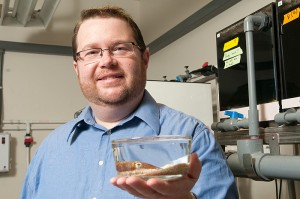 <p>Spencer Nyholm, assistant professor of molecular and cell biology, with a Hawaiian Bobtail Squid. Photo by Jessica Tommaselli</p>