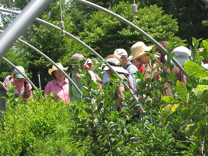 As part of their tour, Master gardeners visited the C.R. Burr Teaching Nursery which features a wide variety of nursery crops.