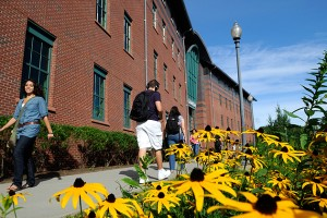 Students walk along the sidewalk near a patch of daisies in front of the Chemistry Building. (Peter Morenus/UConn Photo)