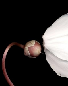 """Artwork by Gene Gort - Digital Print Editions, """"'Cyclamen"""" on display in the Celeste LeWitt Gallery, Food Court, UConn Health Center, from June 28 - September 26, 2012 (Photo provided by Gene Gort)"""
