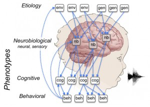 Environment, genetics, neurobiology, cognition, and behavior all have a role in human language, as this figure from the grant proposal illustrates.