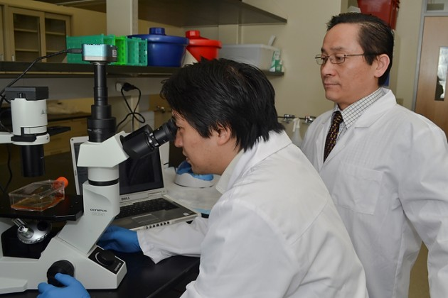 From left, Drs. Xiaofang Wang and Ren-He Xu of ImStem Biotechnology, a UConn spin out developing novel therapies using stem cells, that was recently issued a patent for human embryonic stem cell derived mesenchymal stem cells and the method of producing the stem cells. (Tina Encarnacion/UConn Health File Photo)