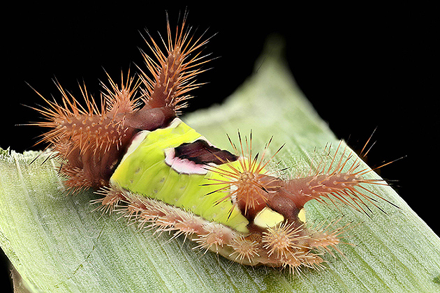 Caterpillar in Ultra High Resolution Imgur (Photos by Mark Smith)