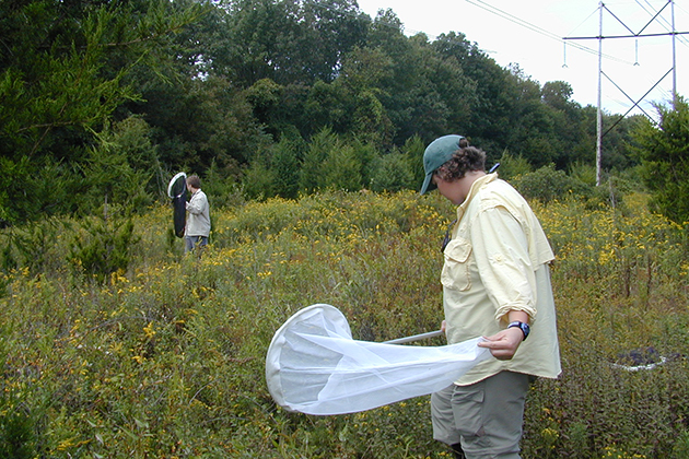 Collecting insect specimens along a power line corridor. (Photo courtesy of David Wagner)