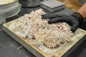 Richard Parnas, a professor of chemical, materials, and biomolecular engineering, has found a way to turn waste carpet into particle board. Photo taken on June 18, 2015. (Sean Flynn/UConn Photo)