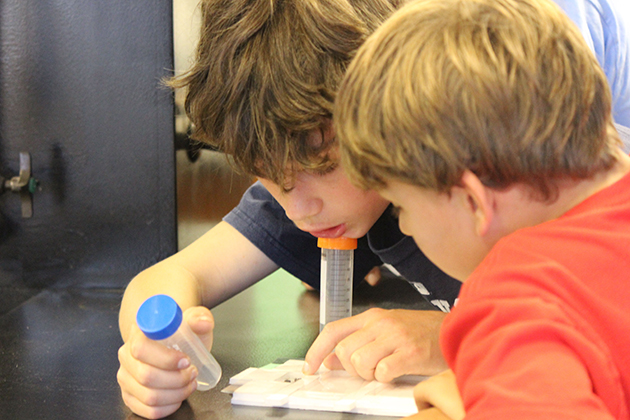 Zach Sobel-Pressman, left, and his brother Ari both of West Hartford learn about ants exploring space during BioBlitz 2015 on July 25, 2015. (Sheila Foran/UConn Photo)