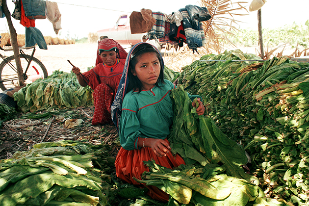 Huichole girl threads strings of tobacco in Nayarit, Mexico. (Robin Romano/UConn Archives & Special Collections)