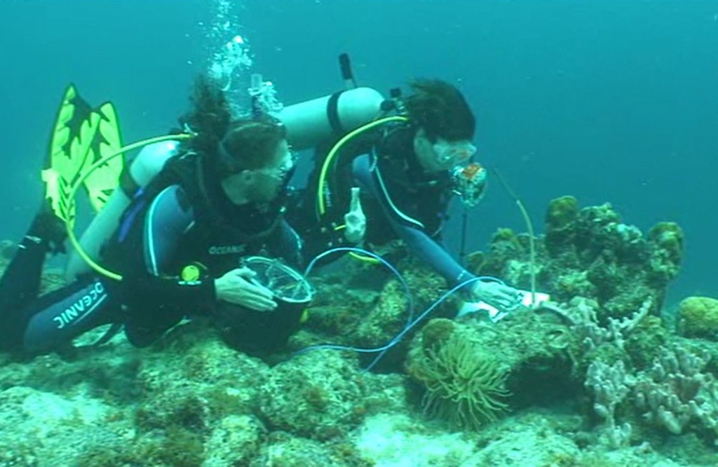 Professor Heidi Dierssen (right) and Ph.D. candidate Brandon Russell (left) use a custom-built dive spectrometer to measure the way light reflects and depolarizes the light from coral reefs in Curacao. (Jeff Godfrey/UConn Photo))