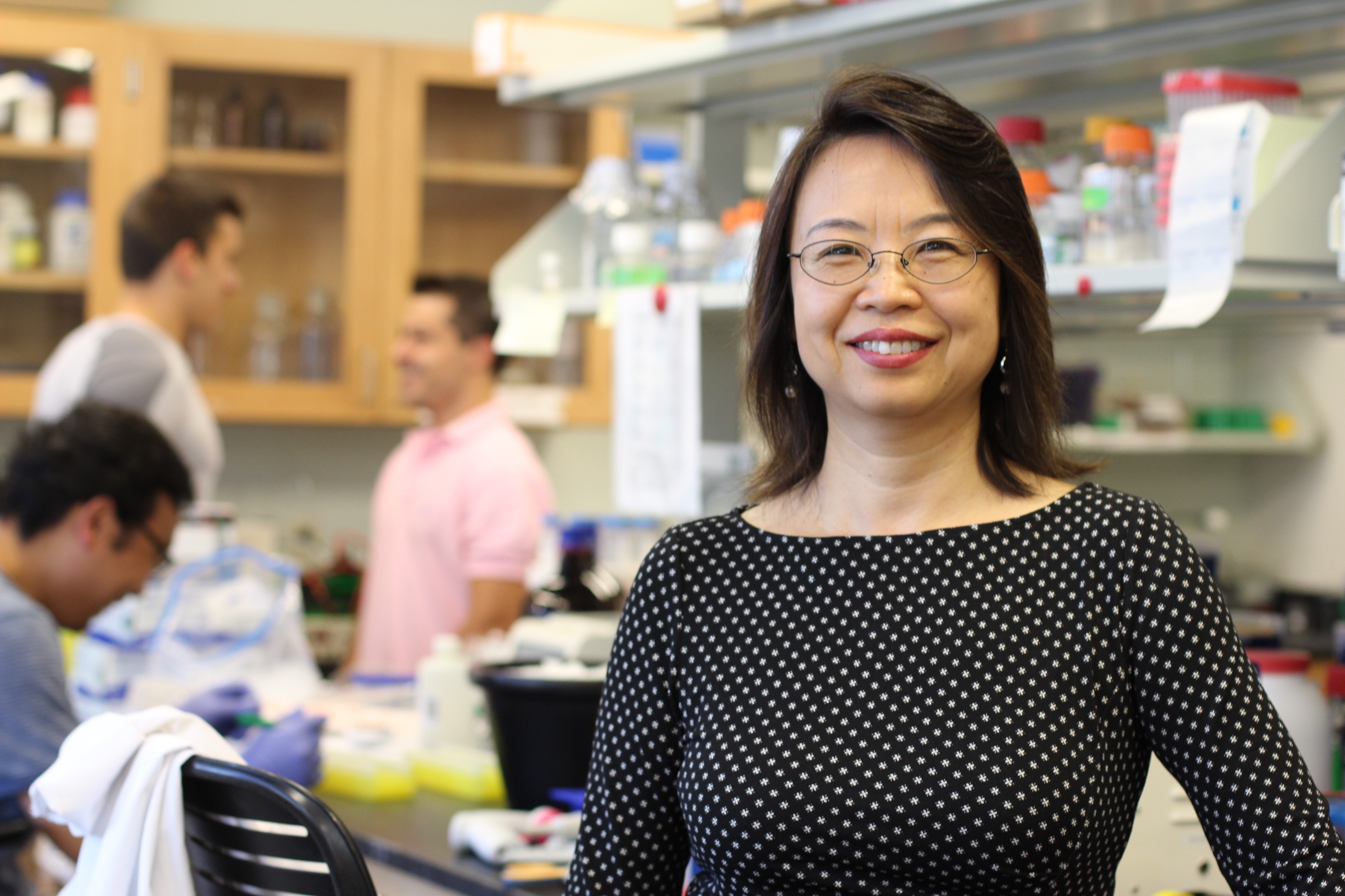 Professor of Physiology and Neurobiology Li Wang is a pioneer of new knowledge about the molecular biology and genetics of the liver and its diseases. (Christine Buckley/UConn Photo)