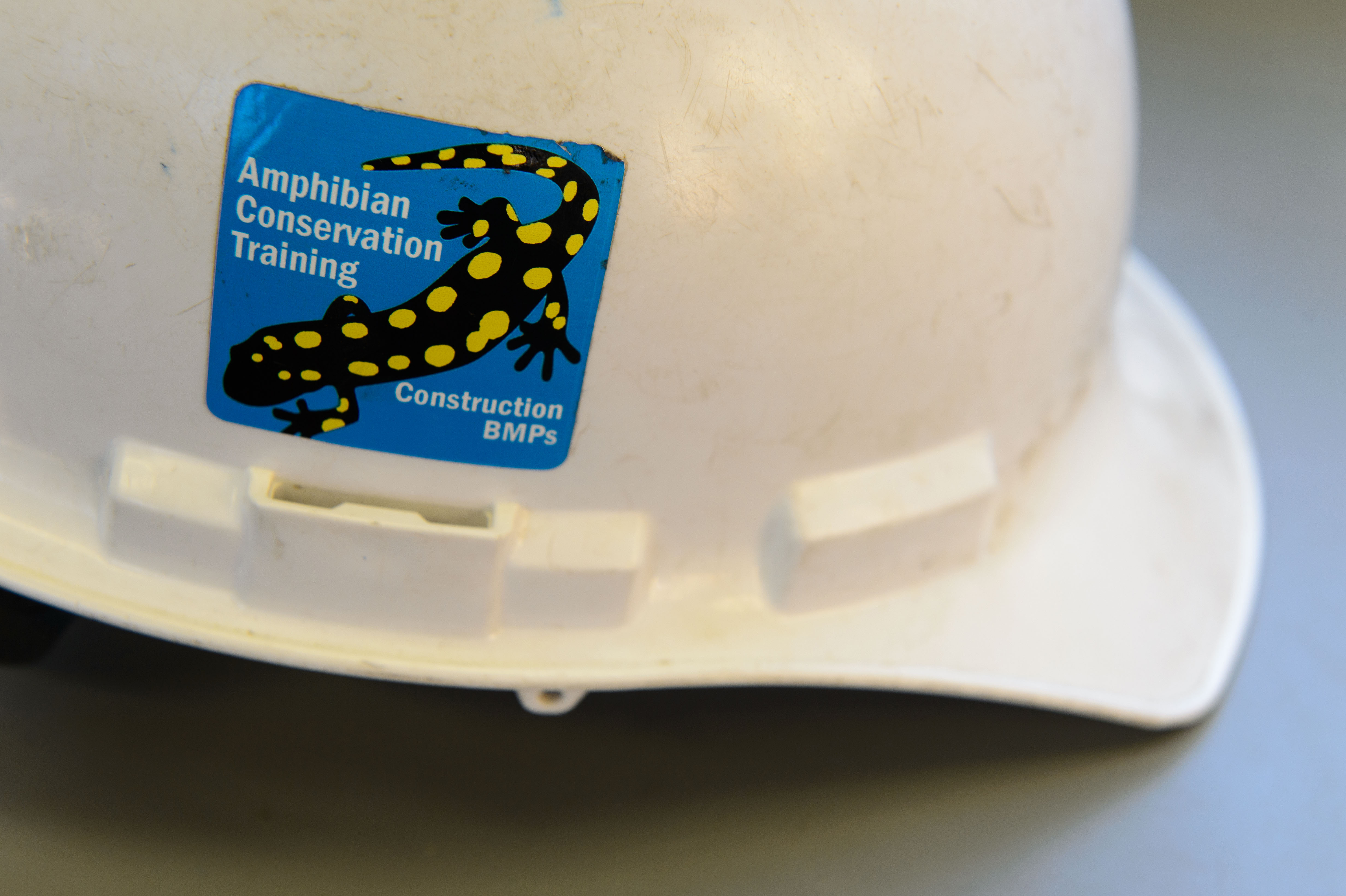 A construction worker's hard hat with a sticker noting that the workers had received training on the protection of the amphibians that live along the new road. (Peter Morenus/UConn Photo)