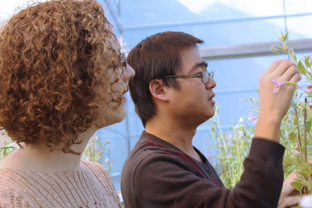Ecology and evolutionary biology professor Yao-Wu Yuan, right, and Ph.D. student Lauren Stanley look at monkey flowers in the research greenhouse. (Sheila Foran/UConn Photo)
