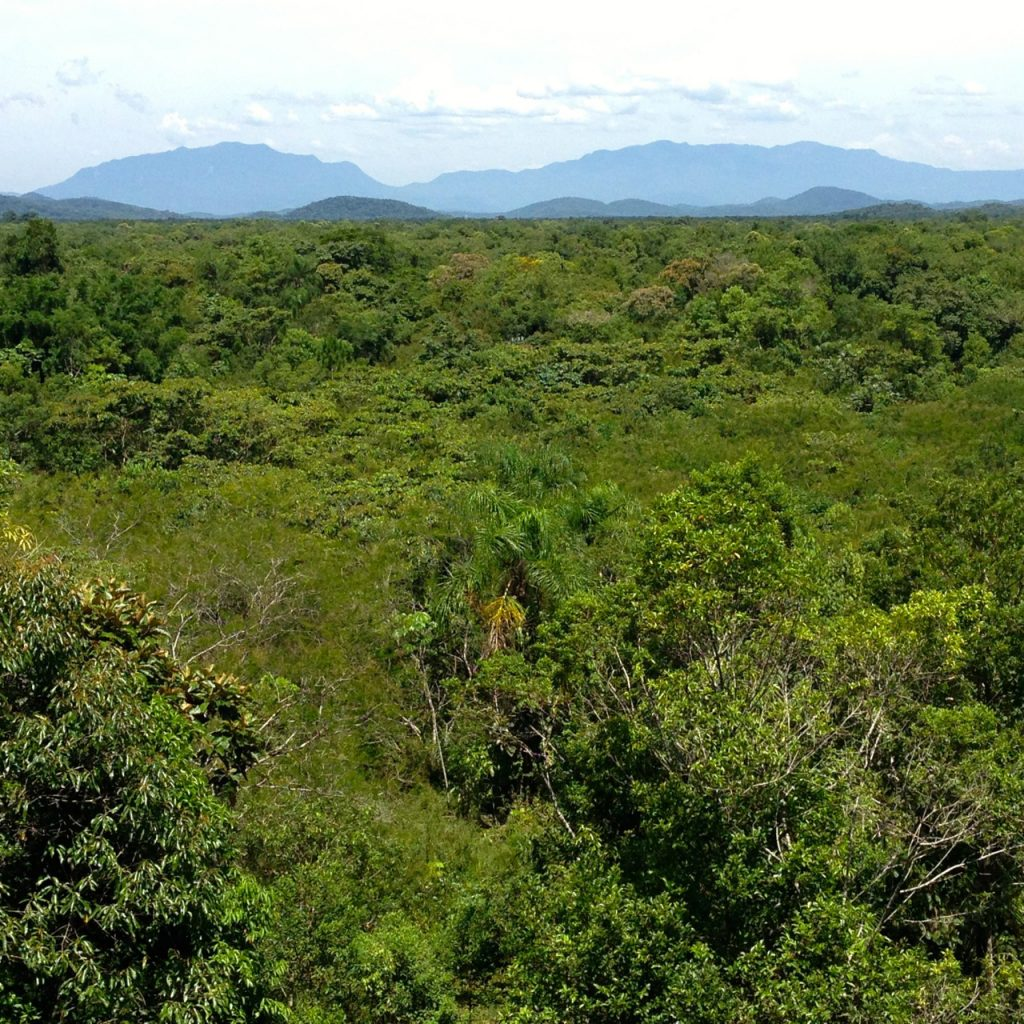 Extensive spontaneous and assisted natural regeneration of Atlantic Rain Forest at Rio Cachoiera nature reserve, Antonina, Parana, Brazil. (Robin Chazdon/UConn Photo)
