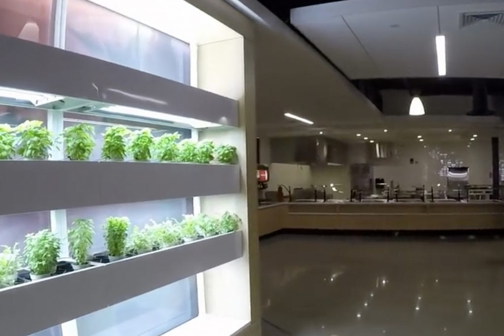 The newly renovated Putnam Refectory dining hall includes an area for growing fresh herbs. (PAES/UConn Photo)