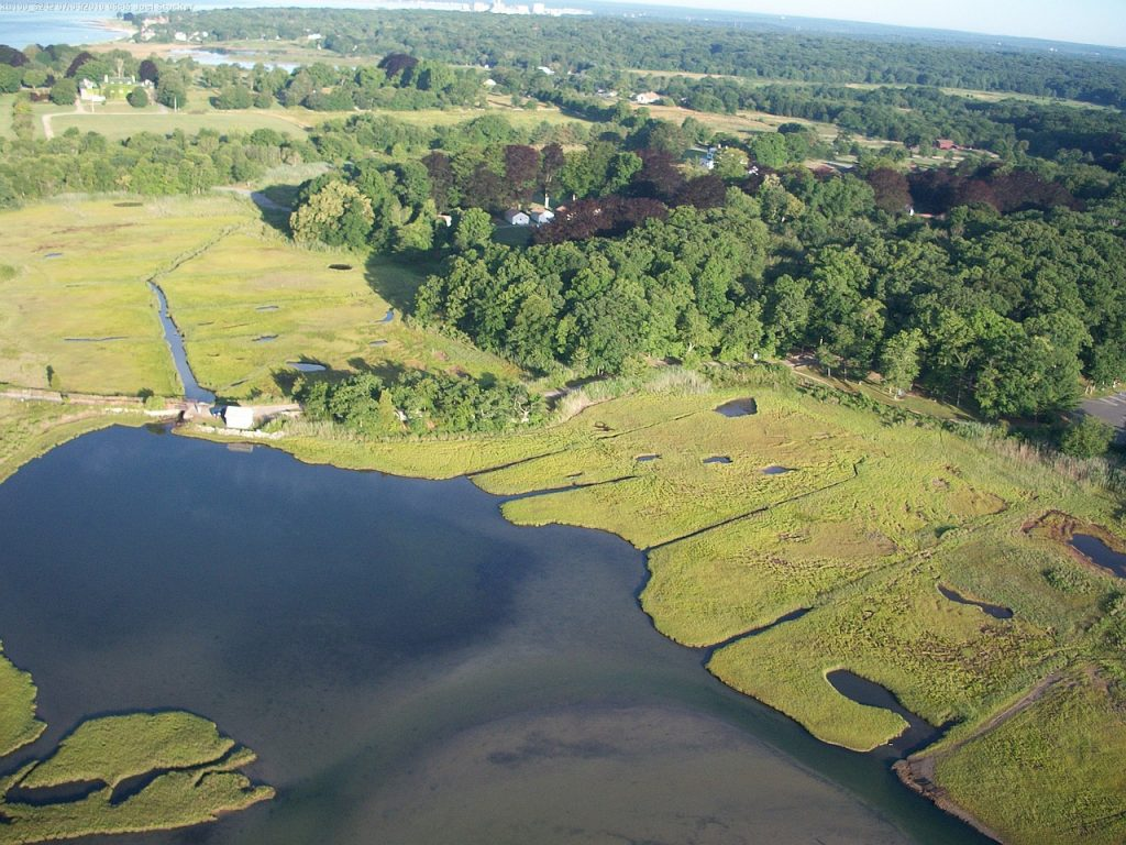 Because tidal marshes were once seen as wasted land that could be put to better use, many were used as landfills, filled for development or excavated for marinas and ports.