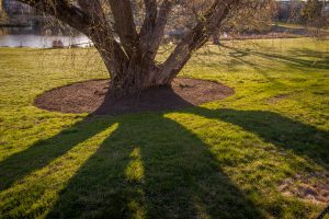 Shadows of a tree near Mirror Lake. (Sean Flynn/UConn Photo)