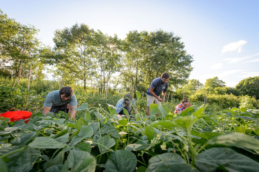 At UConn's Spring Valley Farm, students grow vegetables to sell to the community. (Peter Morenus/UConn Photo)