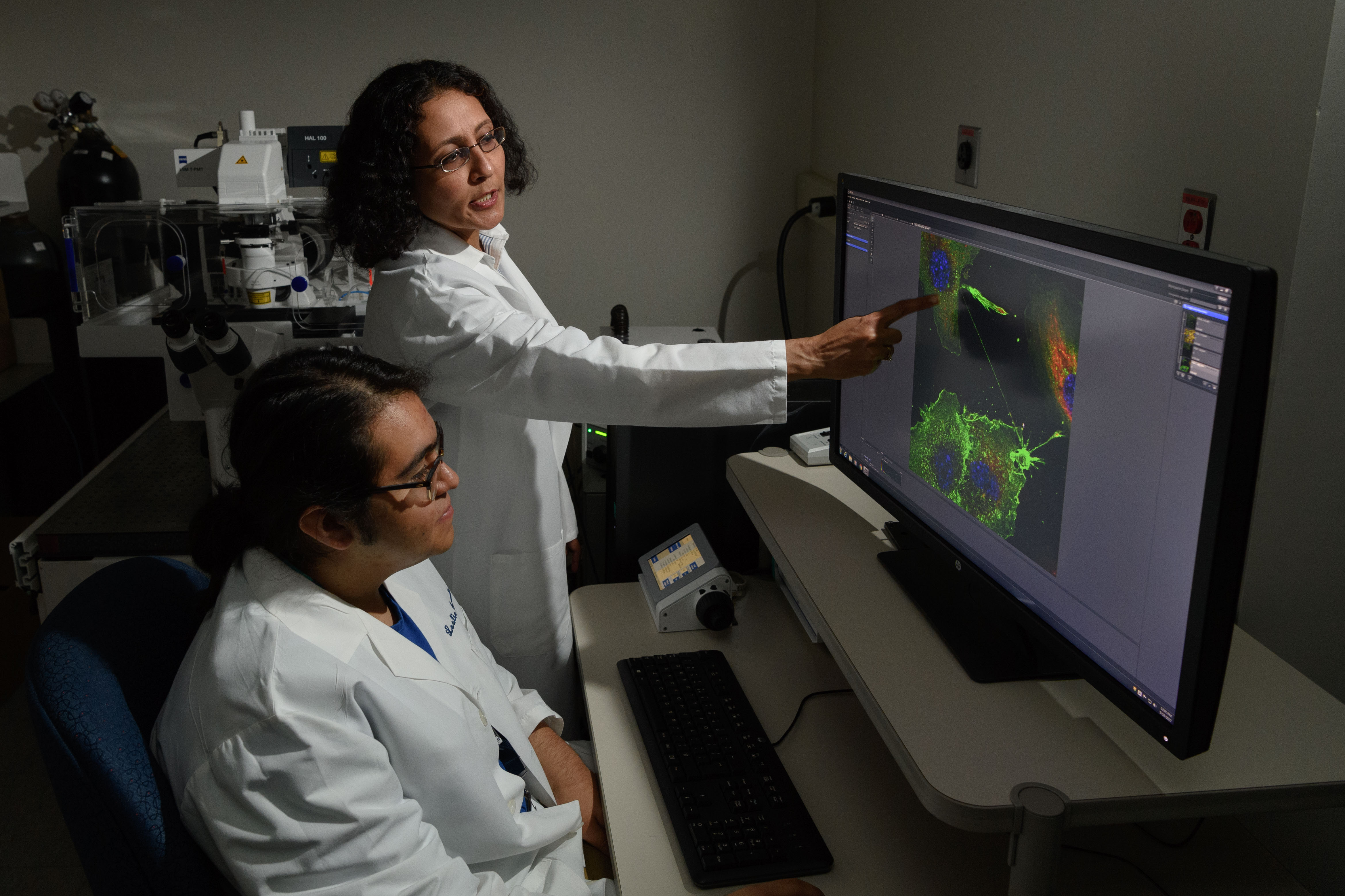 Brian Aguilera '19 (CLAS) and Mallika Ghosh, assistant professor of cell biology, with microscope images of tunneling nanotubes at UConn Health. (Peter Morenus/UConn Photo)