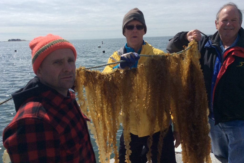 From left, Bren Smith of GreenWave, Scott Lindell of Woods Hole, and UConn biologist Charles Yarish, hold up a rack of seaweed.