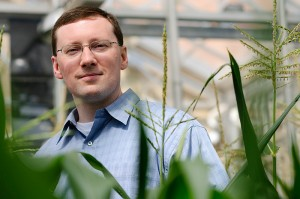 <p>Michael Raab stands with stalks of corn growing in a greenhouse at the Agriculture Biotechnology Building. Raab is president of Agrivida a business participating in the Technology Incubation Program.   Photo by Peter Morenus</p>