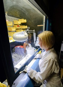 <p>Vanessa Schumacher, a resident in veterinary pathology, prepares tissue samples at the Connecticut Veterinary Diagnostic Laboratory. Photo by Peter Morenus</p>