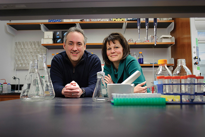 Pharmaceutical science professors Dennis Wright and Amy Anderson conduct research on strategies to combat drug-resistant bacteria. (Peter Morenus/UConn Photo)