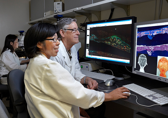 <p>Dr. David Rowe reviews research data with Xiaonan Xin. Photo by Lanny Nagler</p>