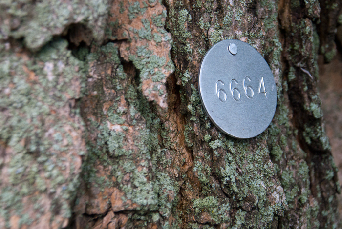 <p>An environmental tag on one of the many trees around campus. Photo by Sean Flynn</p>