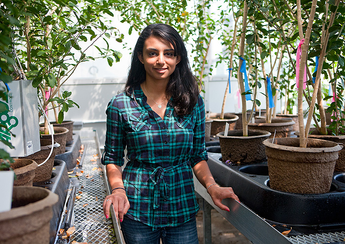 Nikisha Patel, a UConn honors student named one of about 30 winners of the 2011 Young Botanist Award from the Botanical Society of America.