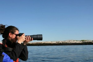 The focus is on seals off the Isle of Shoals, located approximately six miles off the coast of Maine and New Hampshire._lg