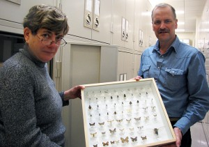 David Wagner, professor of ecology & evolutionary biology, and Jane O'Donnell, manager of scientific collections. (Sheila Foran/UConn Photo)