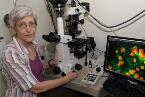 Betty Eipper, professor of neuroscience and molecular, microbial and structural biology, was selected as the 2012 recipient of the Osborn Biomedical Science Graduate Teaching Award. (Tina Encarnacion/UConn Health Center Photo)