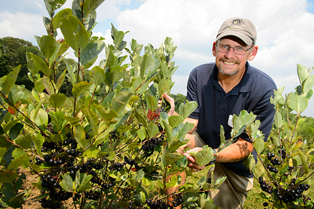 Mark Brand, professor of plant science and landscape architecture, receives patent for purple-leaf sand cherry cultivar. (Peter Morenus/UConn Photo)