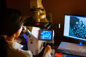 A Ph.D. student pursues her research in the lab. (Christopher LaRosa/UConn Photo)