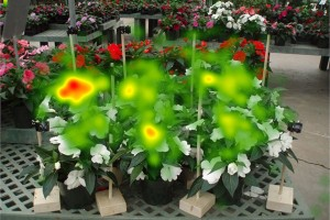 The same display of flowers as seen with eye tracking technology. (Photo courtesy of Ben Campbell)