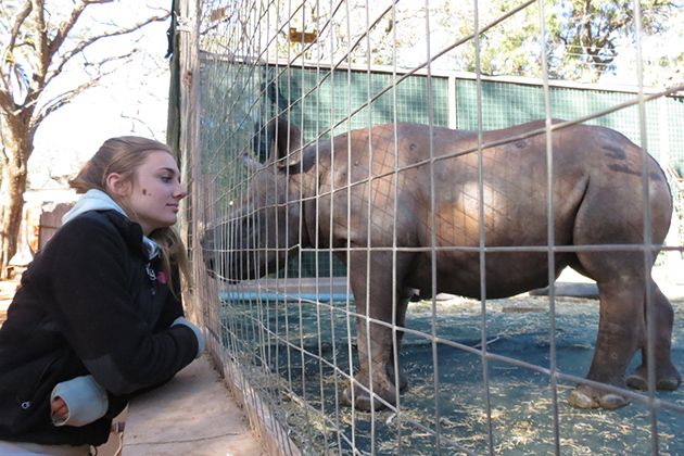 UConn student Alana Russell '13 (CANR) visits with a black rhino calf, the first resident of the world's first dedicated, non-commercial baby rhino orphanage. Russell spent the summer of 2012 at the orphanage in South Africa serving as one of the calf's caretakers.