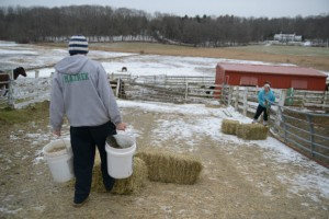 Valerie Mazrek '14 (CANR) in foreground, and Ashley Biase '13 (CANR) bring food and water to the horses twice a day even during the holidays. (Angie Reyes/UConn Photo)
