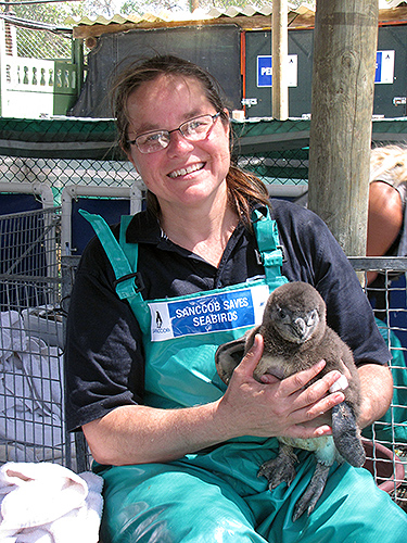 Laurie Macha '87, '91 (CANR) with one of the rescued chicks. (Photo courtesy of Mystic Aquarium)