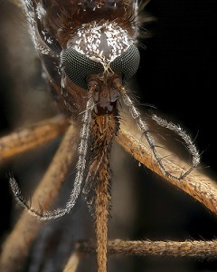 Mosquito Imgur (Photos by Mark Smith)