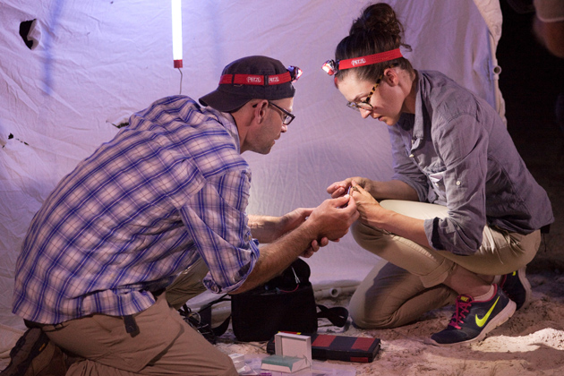 "Christopher Martine '06 Ph.D., left, and Krissa Skogen '08 Ph.D. collect a sample of pollen from the proboscis of a nocturnal hawkmoth at White Sands National Monument in New Mexico while filming the latest episode of Martine's web series, ""Plants Are Cool, Too!"" Both are alumni of UConn's EEB graduate program. (Photo by Patrick Alexander)"