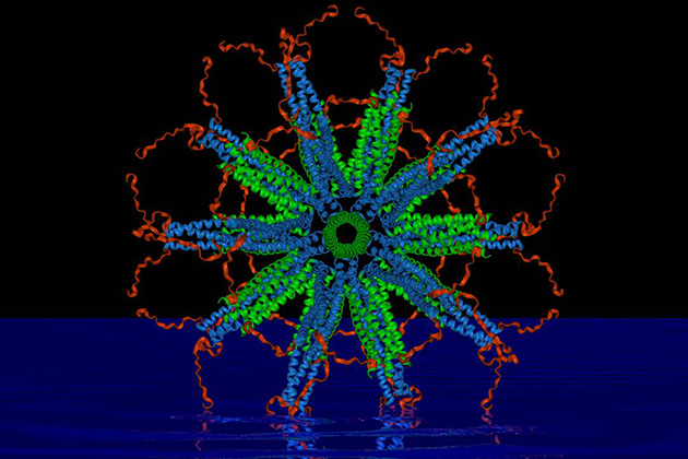 A computer image of a self-assembling protein nanoparticle that relies on rigid protein structures called 'coiled coils' (blue and green in the image) to create a stable framework upon which scientists can attach malaria parasite antigens. (Image courtesy of Peter Burkhard)