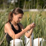 Emily McInerney '15 (CAHNR) takes air samples from wetland plots near the Kellogg Dairy Center on June 24, 2014. (Peter Morenus/UConn Photo)
