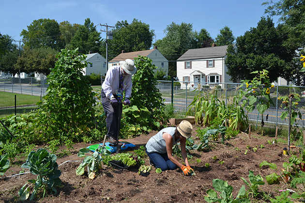 Dr. Bruce Gould and UConn Master Gardener Sheila Dworkin plant lettuce in the garden, which is located on Coventry Street in Hartford's North End. (Chris DeFrancesco/UConn Health Photo)