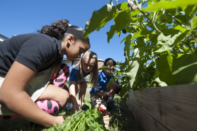 Students at Goodwin Elementary School in East Hartford harvest vegetables during an event to announce the move to UConn of the Rudd Center for Food Policy and Obesity on Sept. 12, 2014. (Peter Morenus/UConn Photo)