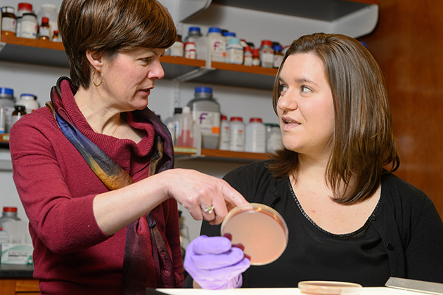 Professor Amy Anderson, left, and graduate student Stephanie Reeve with bacteria on plates. (Peter Morenus/UConn Photo)