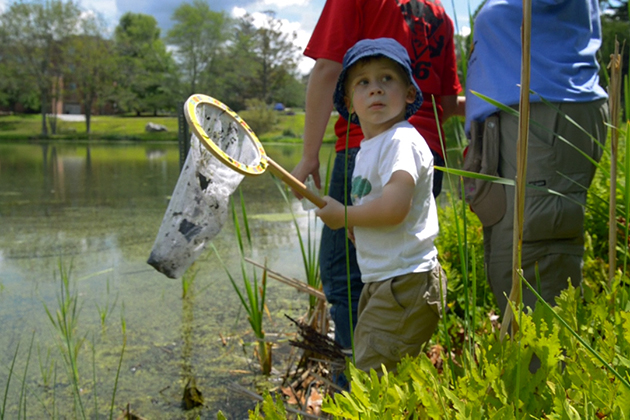 Children and adults joined scientists in observing and cataloging nature during UConn's BioBlitz, July 24-25, 2015. (Ryan Glista '15 (CLAS)/UConn Photo)