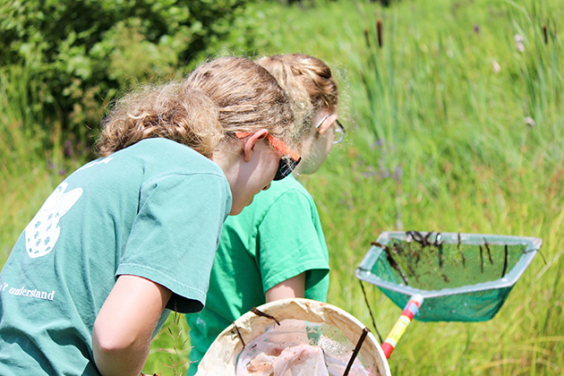 Sarah Johnson an eighth grader from Asford, left, and Caty Cooley, 12, of Mansfield, collect species at the HEEP wetlands near North Campus during BioBlitz 2015 on July 25, 2015. (Sheila Foran/UConn Photo)