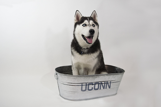 Jonathan XIV sitting in a bucket. (Sean Flynn/UConn Photo)
