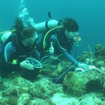 Professor Heidi Dierssen (right) and Ph.D. candidate Brandon Russell (left) use a custom-built dive spectrometer to measure the way light reflects and depolarizes the light from coral reefs in Curacao. (Jeff/Godfrey/UConn Photo)