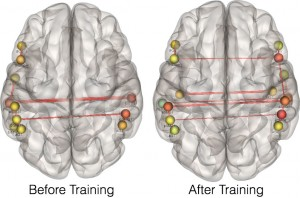This image shows changes of connectivity in the brain that results from training on non-native speech sounds. Before training, regions on the left side of the brain show the strongest connectivity. After training, connects cross from left to right as individuals learn to perceive differences among difficult non-native speech sounds.