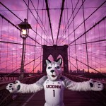 Jonathan the husky walks along the Brooklyn Bridge on Jan. 15, 2016. (Peter Morenus/UConn Photo)